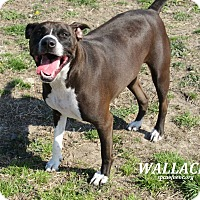 Adopt A Pet :: Wallace - Elizabeth City, NC