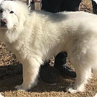 Adopt A Pet :: Heidi - Minneapolis, MN