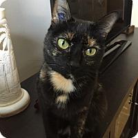 Adopt A Pet :: Mocha - Vancouver, BC