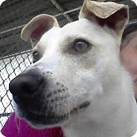 Adopt A Pet :: TREVOR-EMOTIONAL SUPPORT ANIMAL - DeLand, FL