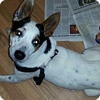 Adopt A Pet :: Sugar - temecula, CA