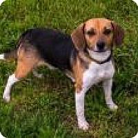 Adopt A Pet :: Lou Ann - Fairfax, VA