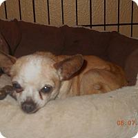 Adopt A Pet :: king - haslet, TX
