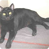 Adopt A Pet :: Sissy - Mesa, AZ