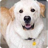 Adopt A Pet :: Dreamer - Portland, OR