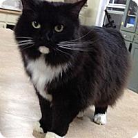 Adopt A Pet :: Hunter - Monroe, GA