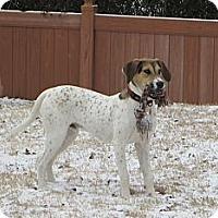 Adopt A Pet :: Waylon Jennings - Hagerstown, MD