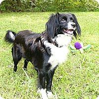Adopt A Pet :: Gypsy - Mocksville, NC