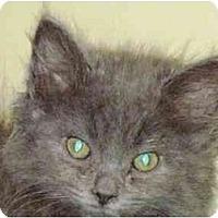 Adopt A Pet :: Oliver - Warren, OH