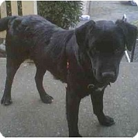 Adopt A Pet :: George - Seattle, WA