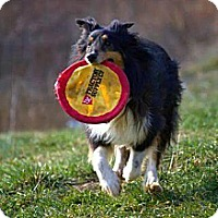 Adopt A Pet :: Bo - Abingdon, MD