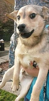 German Shepherd Dog Mix Dog for adoption in Prestonsburg, Kentucky - lon