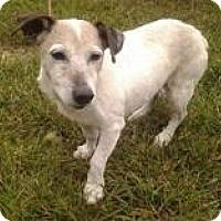 Adopt A Pet :: SnowFlake - Wisconsin Dells, WI