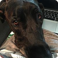 Adopt A Pet :: Zeus - Indianapolis, IN