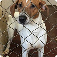 Adopt A Pet :: Milo - Newburgh, IN