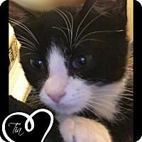 Adopt A Pet :: Tia - Des Moines, IA