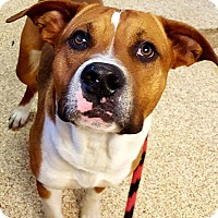 Adopt A Pet :: Henry - Indianapolis, IN