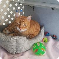 Adopt A Pet :: Tigger - Covington, LA