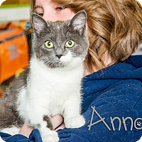 Adopt A Pet :: Anna - Somerset, PA