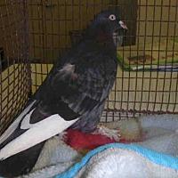 Adopt A Pet :: A1698880 - Los Angeles, CA