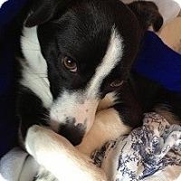 Adopt A Pet :: Tipper - Hamilton, ON