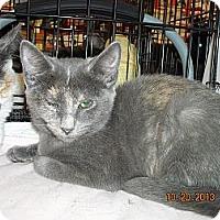 Adopt A Pet :: Skittles - Riverside, RI