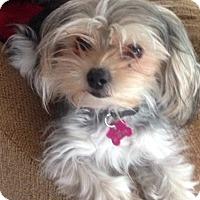 Adopt A Pet :: 4 lb tink - oakland city, IN