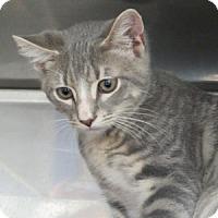 Adopt A Pet :: Brock - Athens, GA