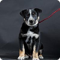 Adopt A Pet :: Robbie - Nuevo, CA