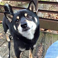 Adopt A Pet :: Akihiko - Manassas, VA