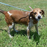 Adopt A Pet :: Priss Pot - Halifax, NC