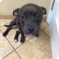 Adopt A Pet :: Precious - calimesa, CA