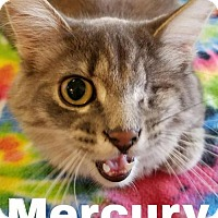 Adopt A Pet :: Mercury - Grand Blanc, MI