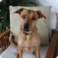 Adopt A Pet :: Penny - Waipahu, HI