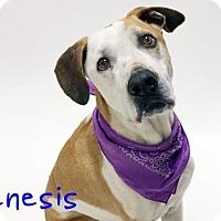 Adopt A Pet :: GENESIS - Sacramento, CA
