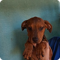 Adopt A Pet :: Tinker - Oviedo, FL