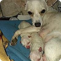 Adopt A Pet :: Victoria - Spring Branch, TX