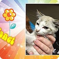 Adopt A Pet :: Janet - Washington, DC