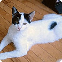 Adopt A Pet :: Domino (Bev's Foster) - Hudson, NY