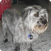 Adopt A Pet :: Flower - Lockhart, TX
