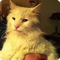 Adopt A Pet :: Al - Pittstown, NJ
