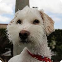 Adopt A Pet :: Marshall - Mission Viejo, CA