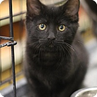 Adopt A Pet :: Luigi - Sacramento, CA