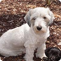 Adopt A Pet :: Esther - La Habra Heights, CA