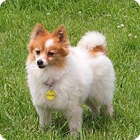 Adopt A Pet :: Emma - Prole, IA