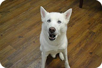 Husky Mix Dog for adoption in Lake Odessa, Michigan - Rock E
