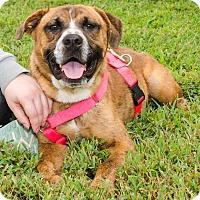 Adopt A Pet :: Squiggy - Midlothian, VA