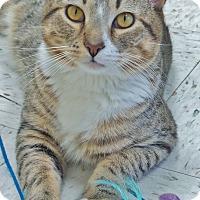 Adopt A Pet :: A.J. - Chambersburg, PA