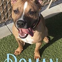 Adopt A Pet :: Roman - Cheney, KS