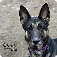 Adopt A Pet :: Nyx - Lyons, NY